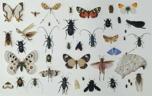 insekter-600x380